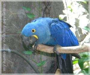 shhh its a parrot secret
